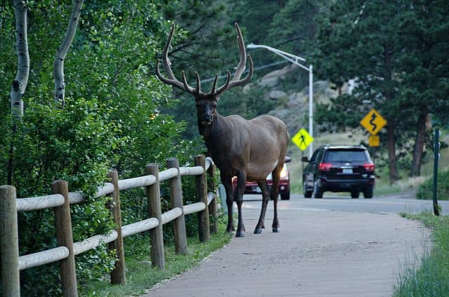 The best red feather lakes camping - Estes Park KOA