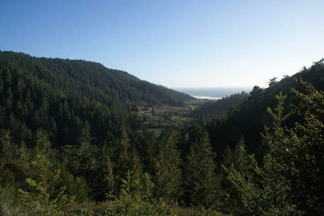 Best Camping in Big Basin - Alder Trail Campground