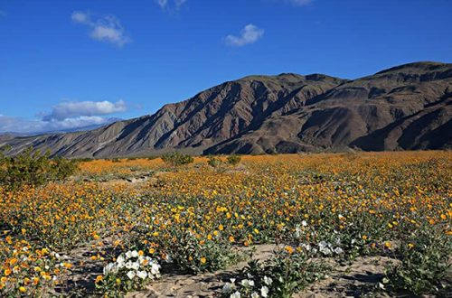 The Best Anza Borrego Camping