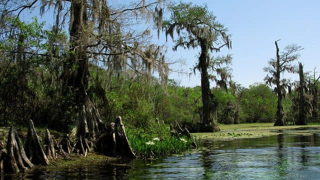 Best Camping in Florida - Ochlockonee River Campground