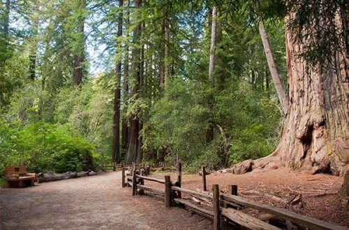 The Best Big Basin Camping