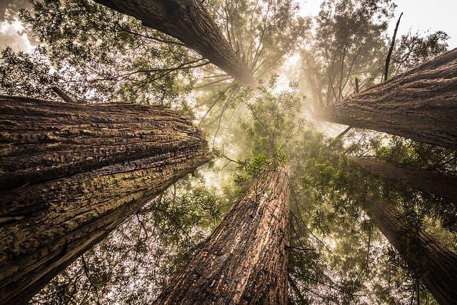 Half Moon Bay Camping - Big Basin Redwoods Campground