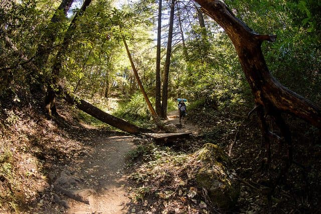 Best Camping in Big Basin - Blooms Creek