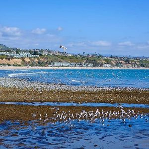 The Best Doheny State Beach Camping