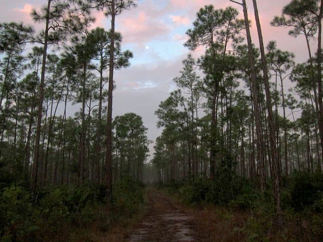 Best Camping in Florida - Long Pine Key