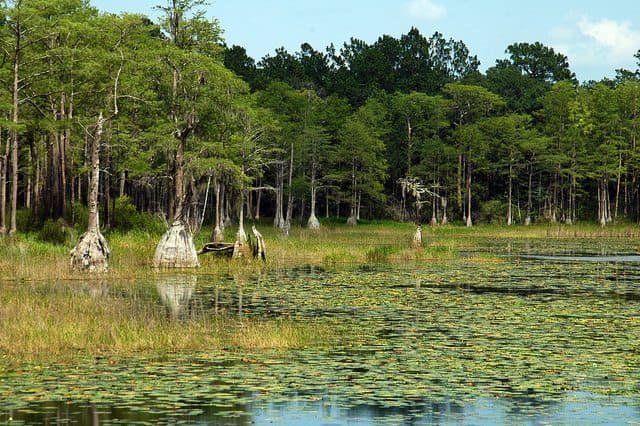 Best Camping in Florida - Pine Creek Campground