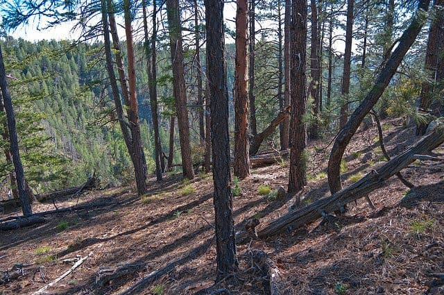 Best Camping in Sedona - Pine Flats