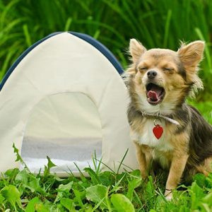 The Best Dog Tent