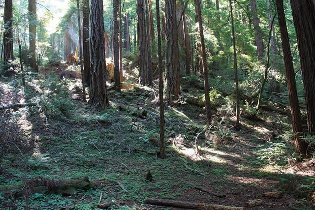 Best Camping in Doheny - San Mateo Campground