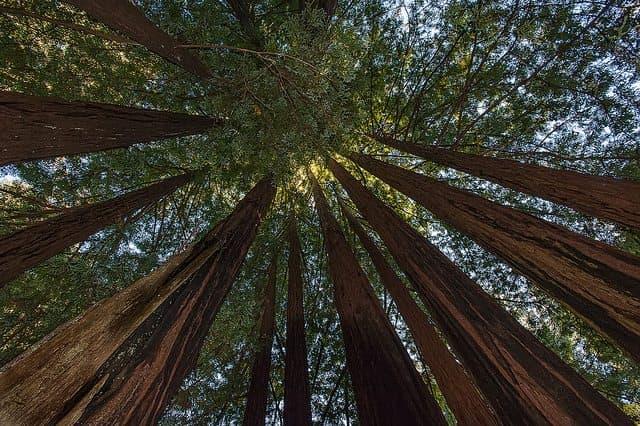 Best Camping in Big Basin - Semperviren Campground