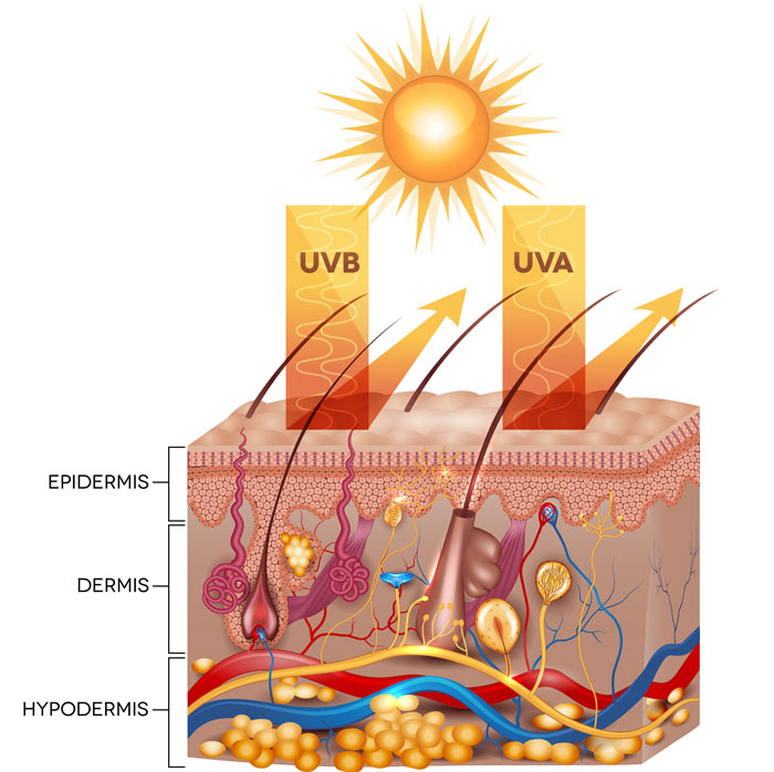 How to Choose Sun Protection (UPF) Clothing - Skin Health