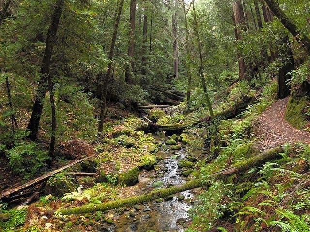 Best Camping in Big Basin - West Waddell Creek