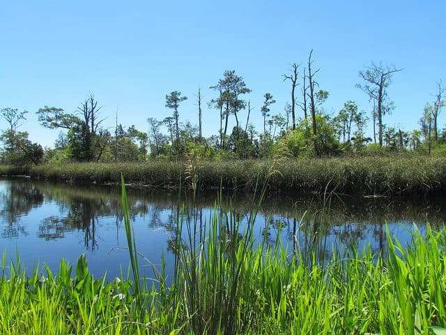 Best Camping in Florida - Whitehead Landing Campground